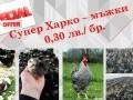 Обява Еднодневни мъжки пилета Супер Харко