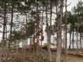 Обява Продавам гора с. Риш