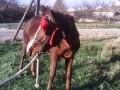 Обява Продажба на кон