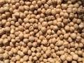 Обява Посевни семена нахут!!