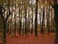 Обява Купува несечени гори в обл.ЛОВЕЧ