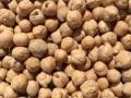 Обява Нахут- посевни семена!