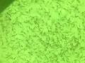 Обява Личинка-шаран, толстолоб (бял и пъстър), амур