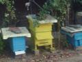 Обява Продавам пчелни кошери с пчелни и пчелни отводки!