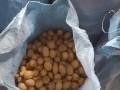 Обява Картофи за животни