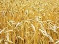 Обява купувам земеделска земя в Силистра