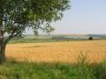Обява Купувам земеделски земи в област Монтана