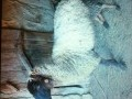 Обява Продавам 4 броя овце