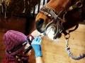 Обява Безплатно обучение на собственици на коне