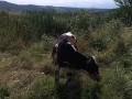 Обява Продавам малко теле и юница