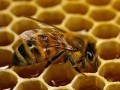 Обява Продавам пчелни кошери с поставени магазини