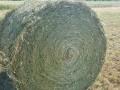 Обява Люцерна рилони бали
