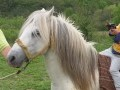 Обява Продавам стадо от каракачански коне