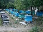 Обява ПЧЕЛИН 40бр. Пчелни кошери