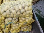 Обява Самоковски картофи сорт сорая