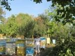 Обява Продава пчелни семейства в кошер система ДБ