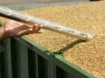 Обява Сонди за зърно