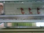 Обява Продавам Клетки за пъдпъдъци носачки от алуминий