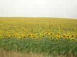 Обява купувам земеделски земи в област Плевен