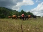 Обява Каракачански коне