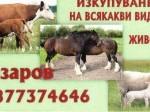 Обява Изкупувам всички видове селскостопански животни