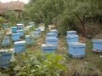 Обява Продавам екологично чист билков пчелен мед
