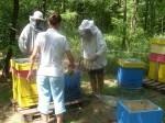 Обява продавам качествени,  пчелни майки-2018