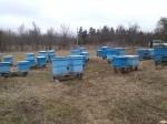 Обява Продавам пчелни семеѝства