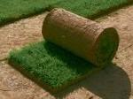 Обява тревни чимове
