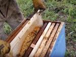 Обява Продавам 12-рамкови кошери с пчели