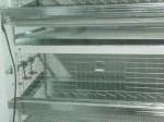 Обява Продавам алуминиеви клетки за кокошки носачкки