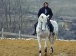 Обява Продавам кон