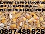 Обява К У П У В А  ЦАРЕВИЦА, ЗЪРНО тритикале, пшеница, ечемик