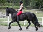 Обява Фантастична tb / фризска спортна кобила