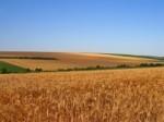 Обява купувам земеделски земи в  Враца