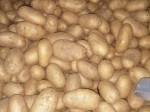Обява Картофи на едро