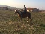 Обява продавам кобила