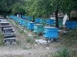 Обява ПЧЕЛНИ КОШЕРИ - ПЧЕЛИН 40 бр.пчелни семеиства