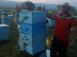 Обява Продавам 30 бр многокорпусни кошери с пчелни семейства