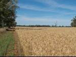 Обява купувам земеделски земи от собственици в област Варна