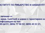 Обява ИРА-Пловдив предлага укрепнали личинки и зарибителен ма