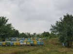 Обява Продавам пчелни кошери