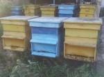 Обява Продавам кошери с пчели
