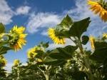 Обява Топ цени за земеделска земя в Северна България!!!