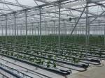Обява Изграждане и оборудване на оранжерии