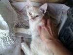 Обява Подарявам СПЕШНО котенца и голям котарак!!