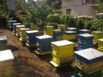 Обява Пчелни семейства в кошери - система Лангстрот -Рут