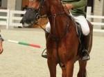 Обява Източнобългарски кон с име Чародей