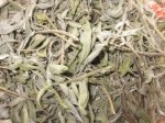 Обява Градински чай (салвия), Salvia officinalis