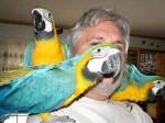 Обява Говорещи папагали за продажба